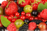 Ripe berries close-up — Stock Photo