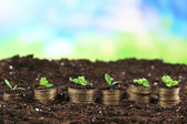 Business concept: golden coins in soil with young plants on nature background — Stock fotografie