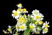 Mooie madeliefjes bloemen op donker grijze achtergrond — Stockfoto