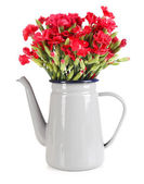 Flowers in flowerpot isolated on white — Stock Photo