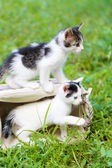 Cute little kittens, outdoors — Stock Photo
