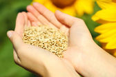 Hands holding sunflower seeds in field  — Stock Photo