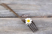 Fork with daisy flower, on wooden background  — Stock Photo