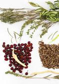 Ingredientes de hierbas medicinales chinas tradicionales, aislados en blanco — Foto de Stock