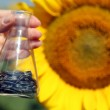 Hand holding tube with seeds in sunflower field — Stock Photo #49457189