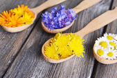 Fresh medical herbs in wooden spoons on table close-up — Stock Photo