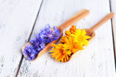 Cornflowers and calendula in wooden spoons on table close-up — Stock Photo