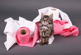 Cute kitten playing with roll of toilet paper,  on gray background — Stock Photo