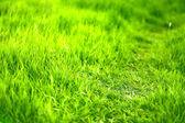 Beautiful green grass in field — Stock Photo