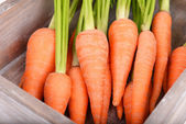 Fresh carrot in crate close up — Stock Photo