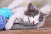Leuk weinig katje slapen op plaid, op lichte achtergrond — Stockfoto