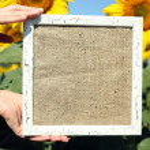 Blackboard blank in hands in sunflower field — Stock Photo #49530321