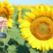 Hand holding tube with seeds in sunflower field — Stock Photo #49530349