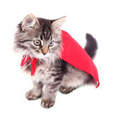 Cat in red cloak — Stock Photo