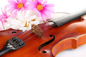 Classical violin with flowers close up — Stockfoto