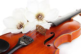 Classical violin with flowers close up — Stok fotoğraf