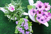 Flowers in  decorative pots on green grass background — Stok fotoğraf