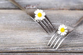 Forks with daisy flowers, on wooden background  — Stock Photo