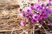Beautiful wild flowers on straw close-up — Stock Photo