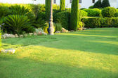 Green lawn in park — Stockfoto