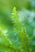Beautiful fern, close up — Foto Stock