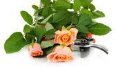 Rose e cesoie del giardino — Foto Stock