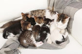 Cute little kittens with their mom, close up — Stock Photo
