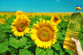Hands holding bottle with oil on sunflower field background — Stock Photo