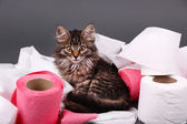 Cute kitten playing — Stock Photo