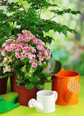 Beautiful flowers in pots — Stock Photo
