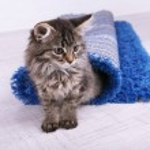 Beautiful kitten in rolled carpet — Stock Photo #49823823