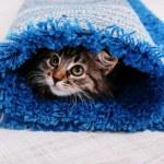 Beautiful kitten in rolled carpet — Stock Photo #49823829