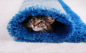 Beautiful kitten in rolled carpet — Stockfoto