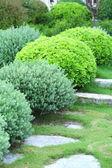Beautiful lush bushes — Stock Photo