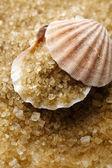 Deniz tuzu ve deniz kabuğu — Stok fotoğraf