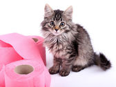 Cute kitten playing with roll of toilet paper, isolated on white — Stock Photo