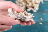 Hand with tweezers holding pearl and oyster on wooden background — Stock Photo