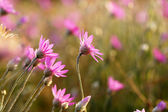 Beautiful wild flowers in field — Stock Photo