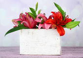 Beautiful lily in crate — Stock Photo