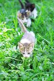 Cute little kittens, outdoors — Stock Photo