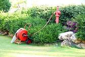 Beautiful landscaping in garden — Zdjęcie stockowe