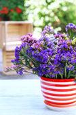 Beautiful flowers in flowerpot — Stock Photo