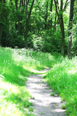 Footpath in forest — Foto de Stock