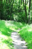 Sentier en forêt — Photo