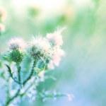 Beautiful wild flowers in field — Stock Photo #50089127