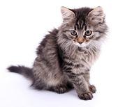 Piękny kociak na białym tle — Zdjęcie stockowe