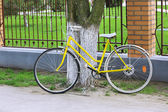 Bicycle near tree in park — Stockfoto
