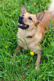Funny cute dog, outdoors — Stock Photo