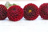 Dahlia flowers on table — Stock Photo