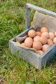 Eggs in wooden basket — Foto de Stock
